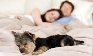 bigstock_Happy_couple_laying_in_bed_wit_15695993-720x437